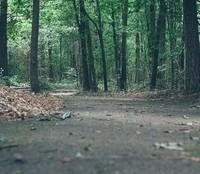 Trails by S.M Scobie