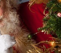 The Christmas Token : Why Reindeer Dance by fwadams