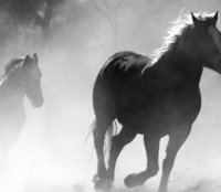 Fortune's Foal by TarampaStudios