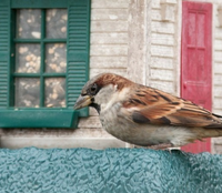 There were sparrows by HEENAKHAN