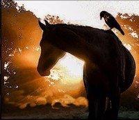 Crowe Legacy: Heat Rising by Nichole P. Conard