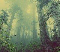 The Druid of Haven by Lukasz Furmaniak