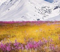 Snow Globe by Carolina Nilsson