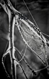 Web by Zoe