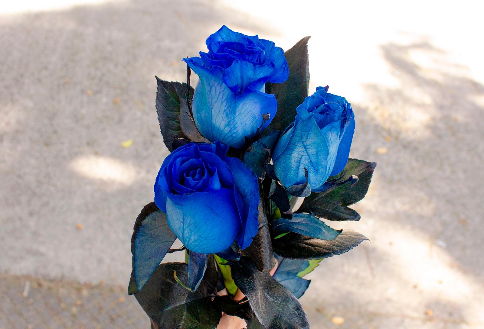 Asombra a quien quieras con ramos de rosas azules