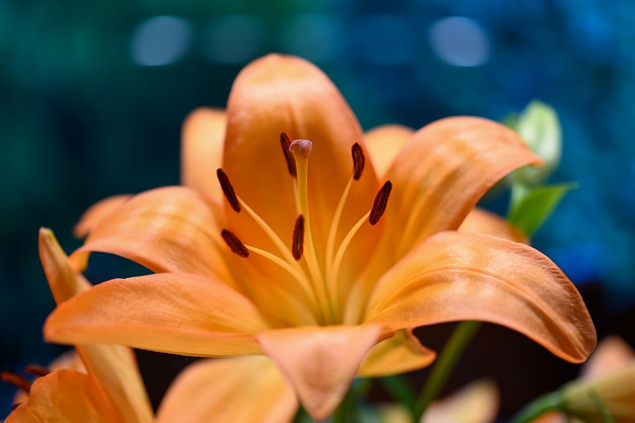 Significado de las flores más habituales