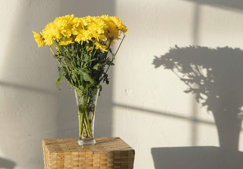 Los beneficios de contar con flores en tu casa