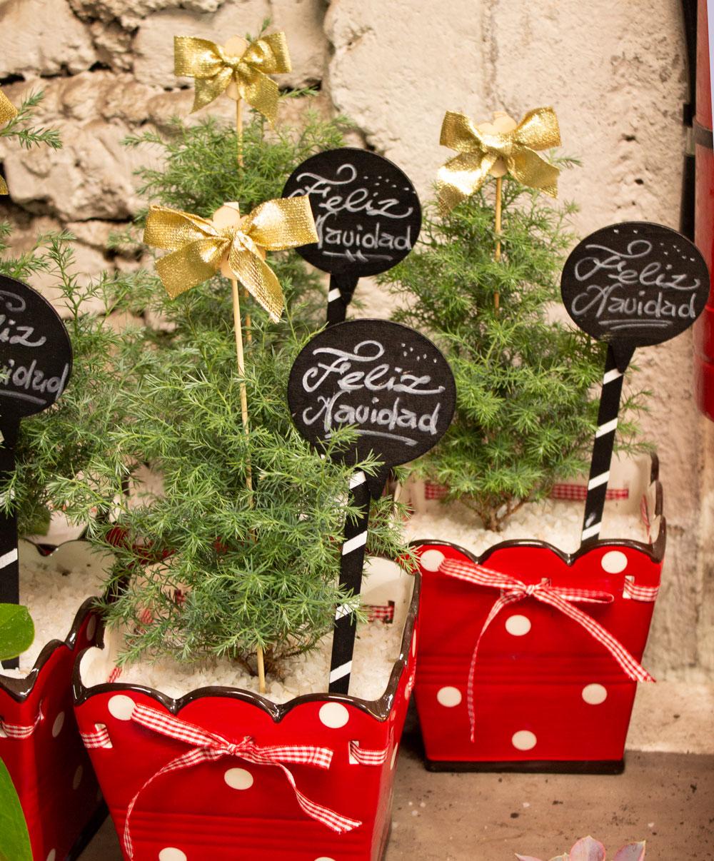 Regala flores para esta Navidad