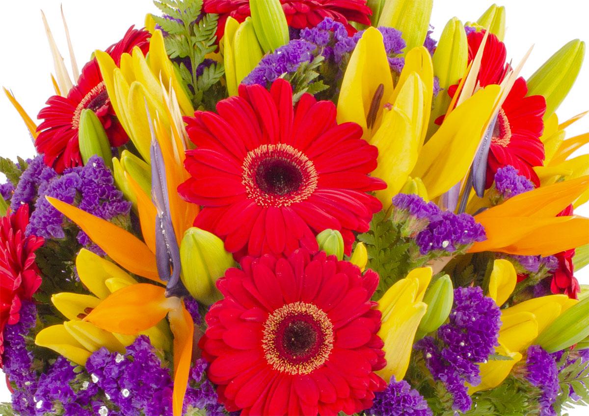 ¿Cuál es el significado de los colores de las flores?