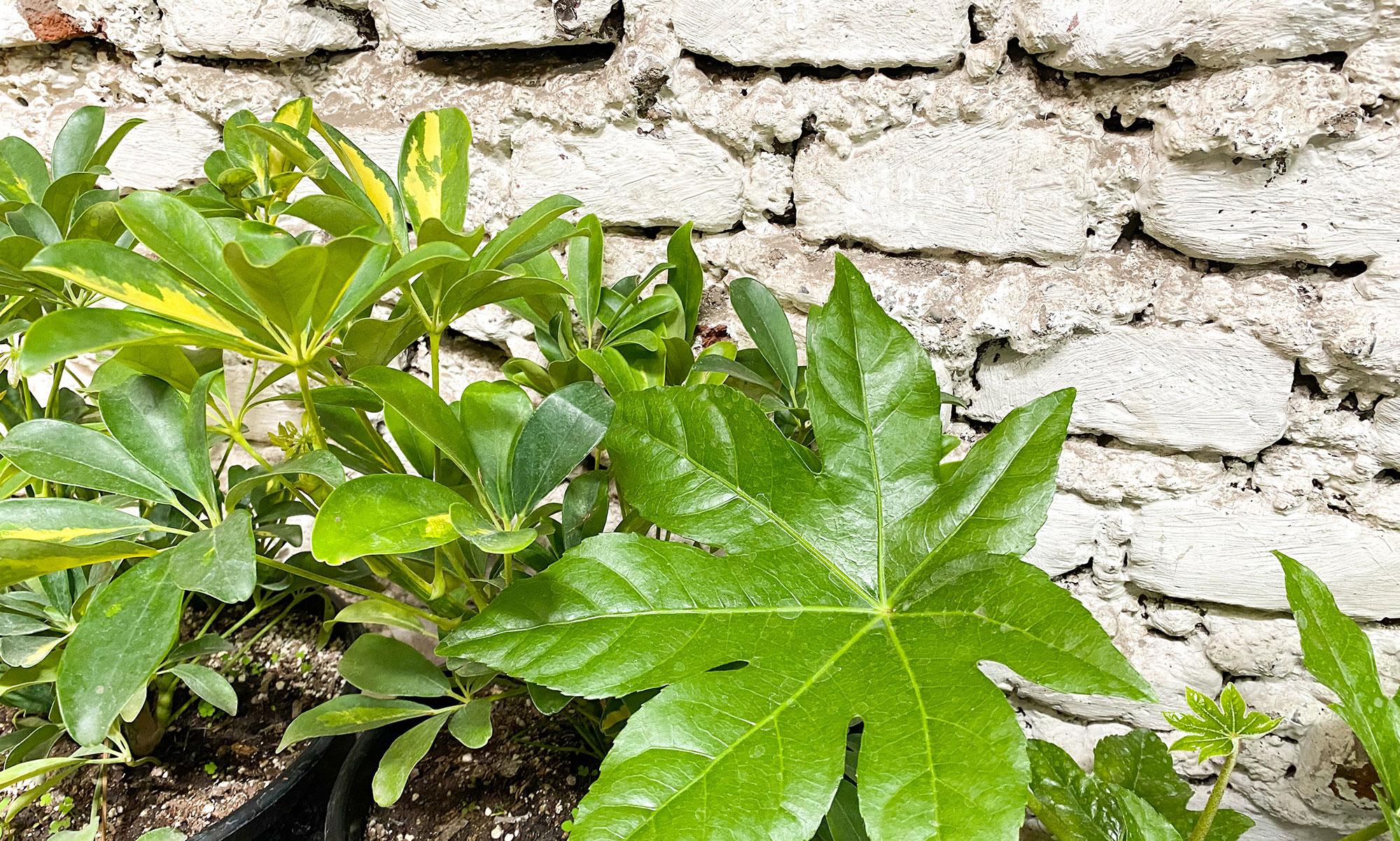 Conoce los cuidados básicos de las plantas y cómo se diferencian las plantas de interior y exterior