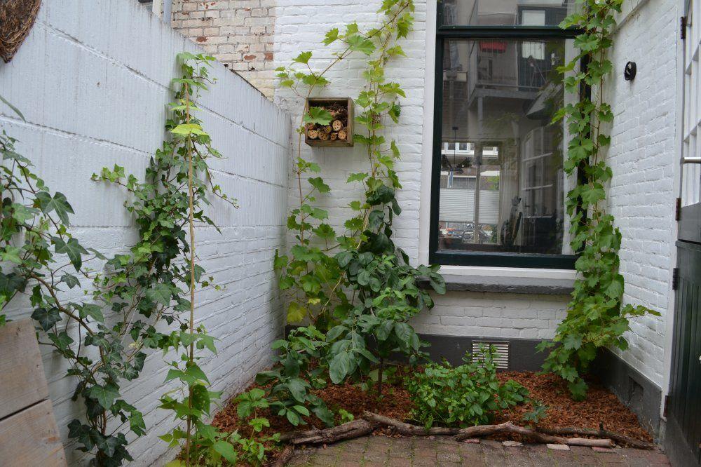 Borneostraat, Utrecht foto-25