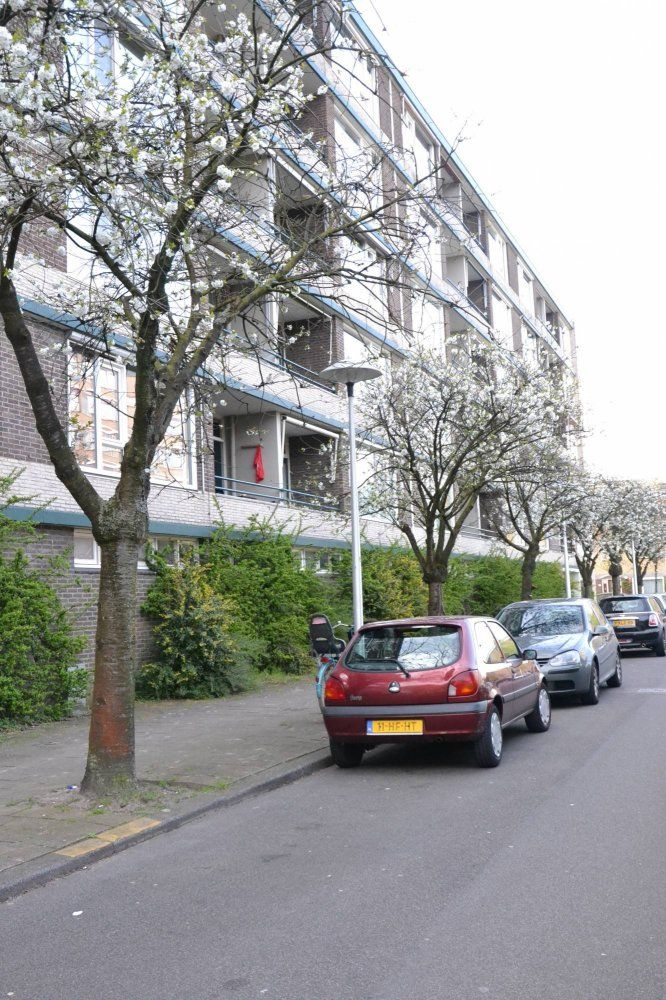 Fruinplantsoen, Utrecht foto-20
