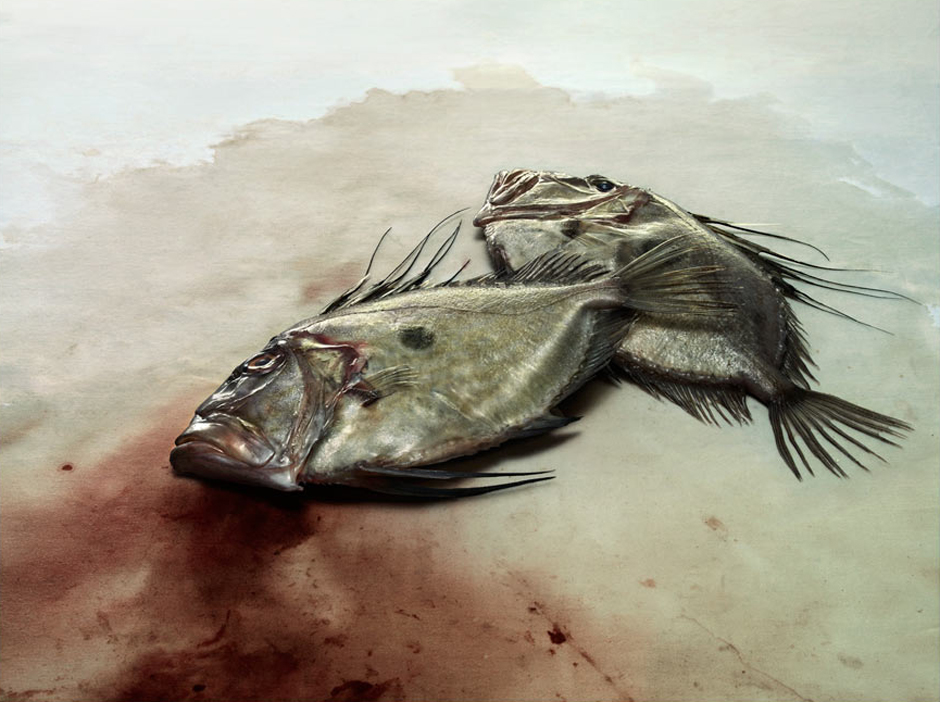 John Dory fish on blotting paper, shot by Giles Revell