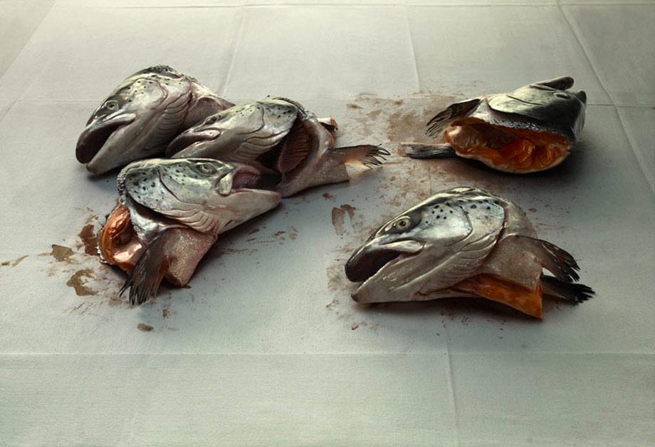 Salmon Heads on blotting paper