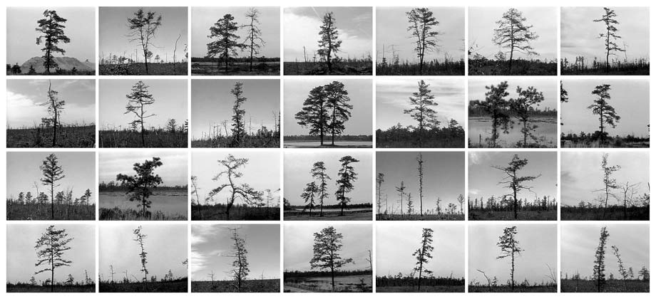 Pine Barrens: Trees