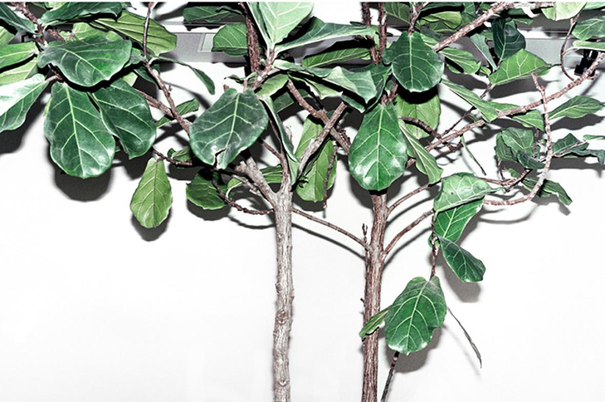 PLANTS_POLLYBROWN_PORT_ISABELM