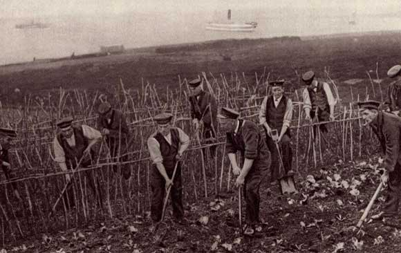 Sailor's Allotment, 1917. Courtesy of Garden Museum
