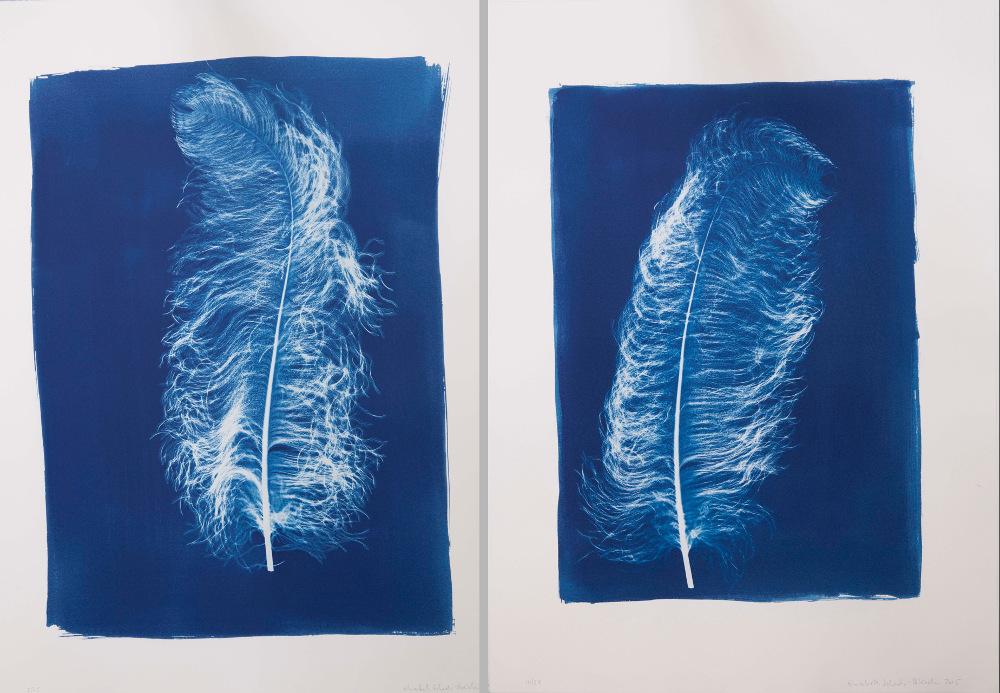 Cyanotype prints by Elisabeth Scheder-Bieschin
