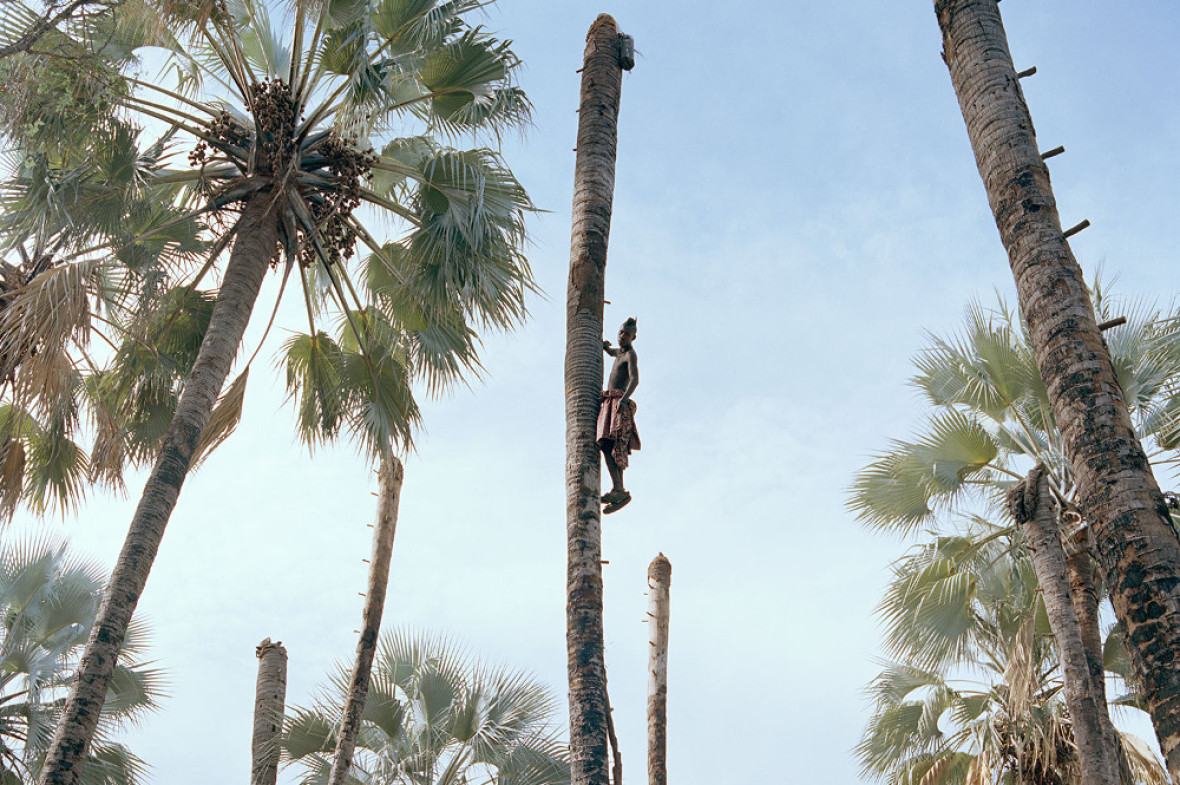 Image courtesy of Kyle Weeks, taken from his series 'Palm Wine Collectors'