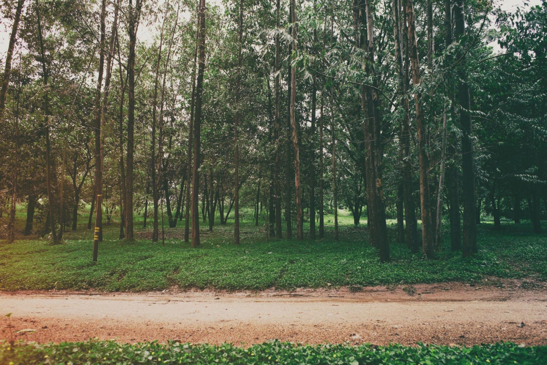 Urban Forrest Saffrou