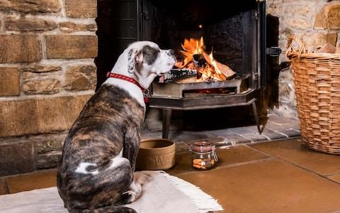 dog sitting by fire in pub