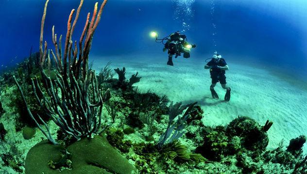 two people scuba diving