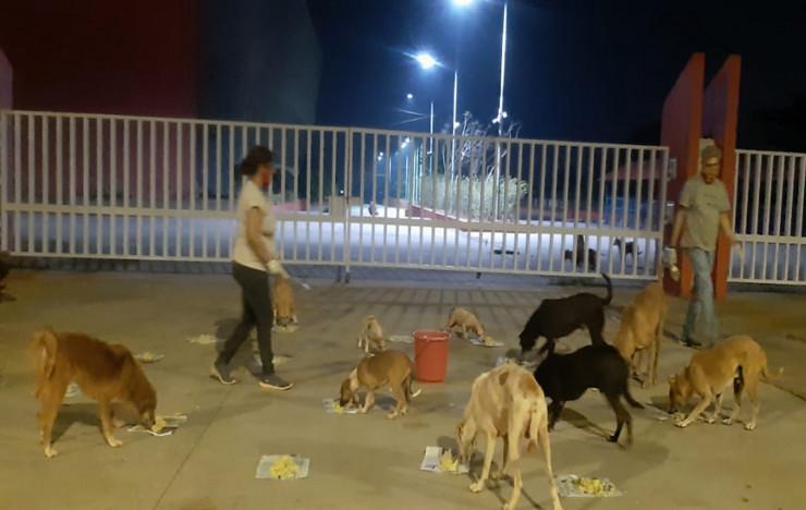 Animal Feeding and Water Bowls: Goa