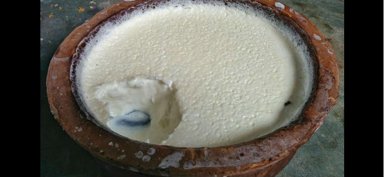 People like to eat curd with rice