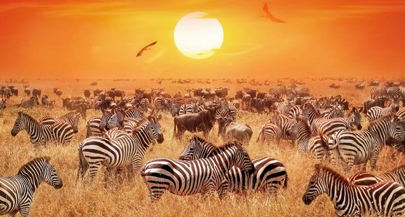 Amboseli, Naivasha & Masai Mara