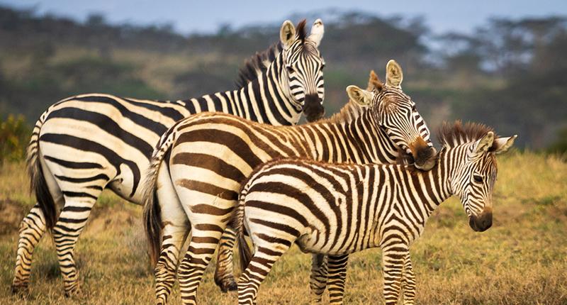 Naivasha & Masai Mara