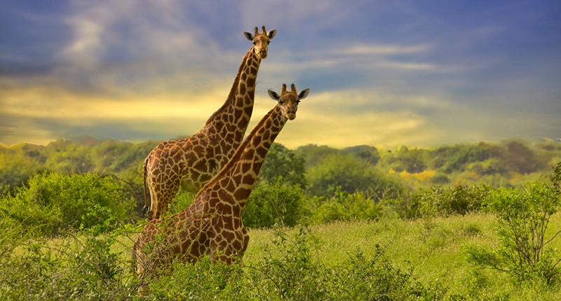 Tsavo Safari Package