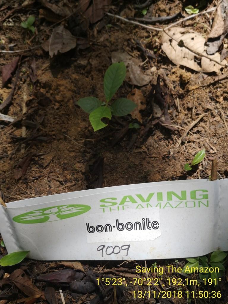Bon - Bonite