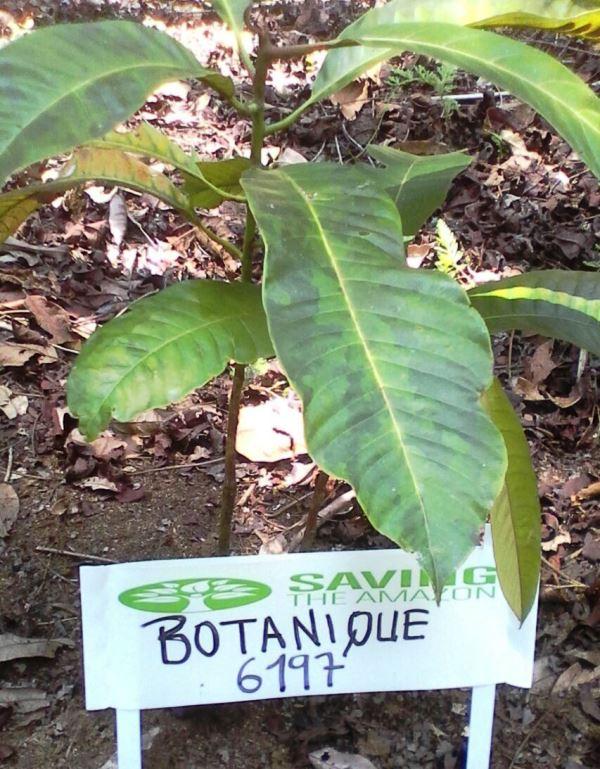 Cliente Botanique