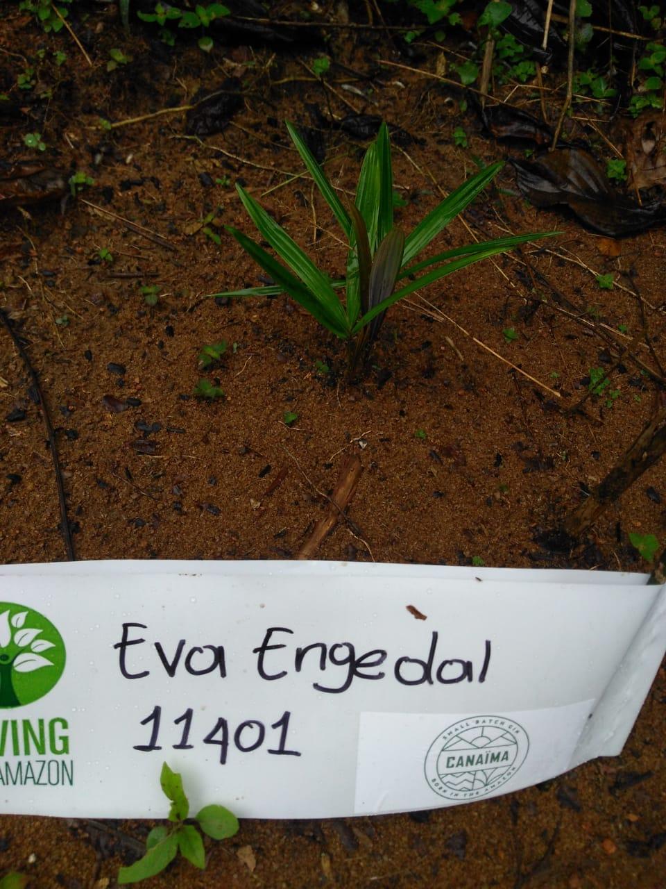 Eva Engedal
