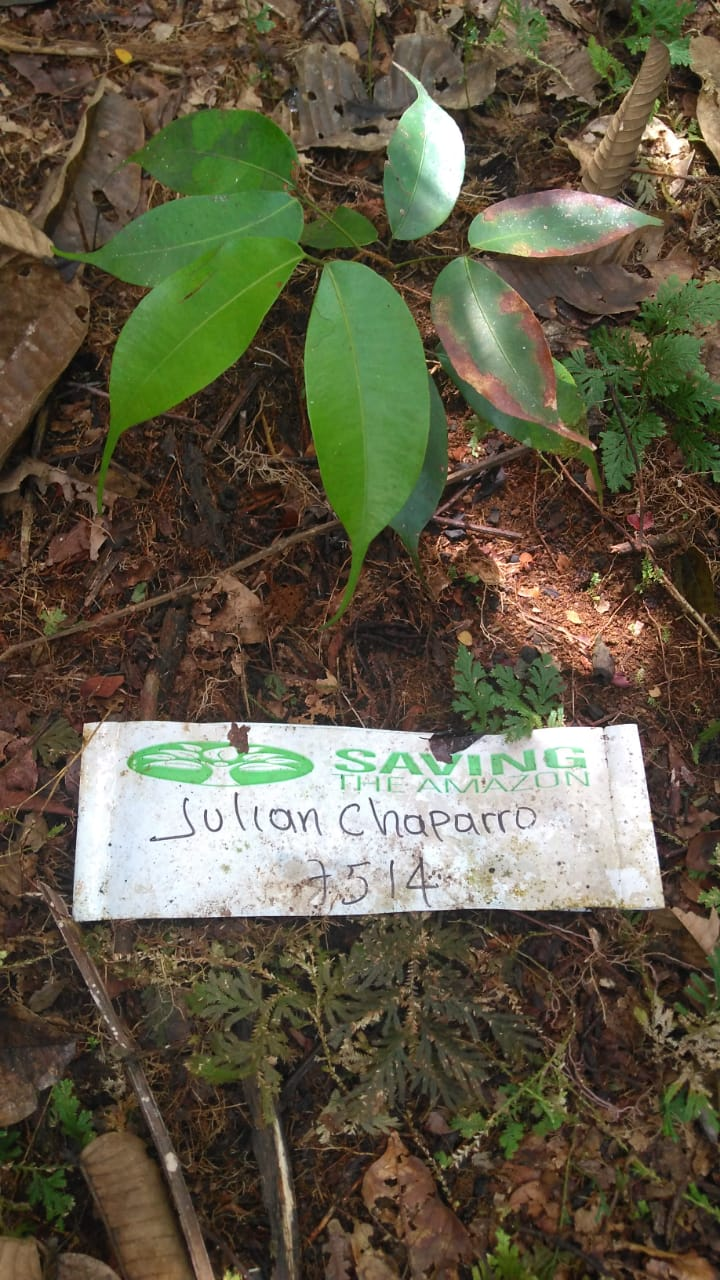 Julian Chaparro