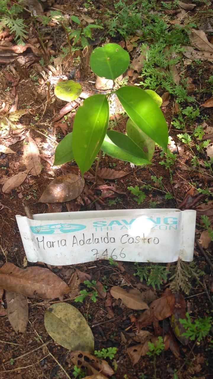 Maria Adelaida Castro