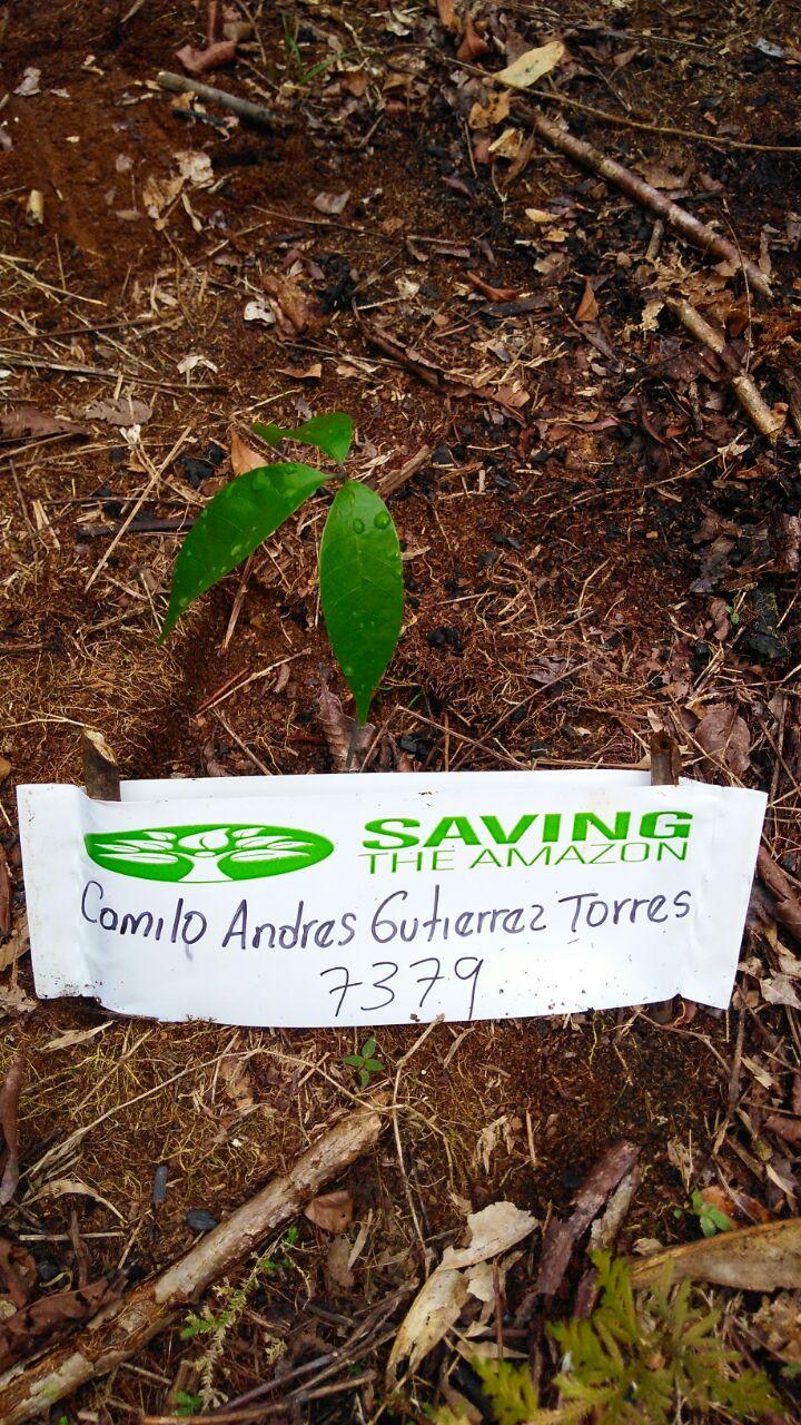 Camilo Andres Gutierrez Torres