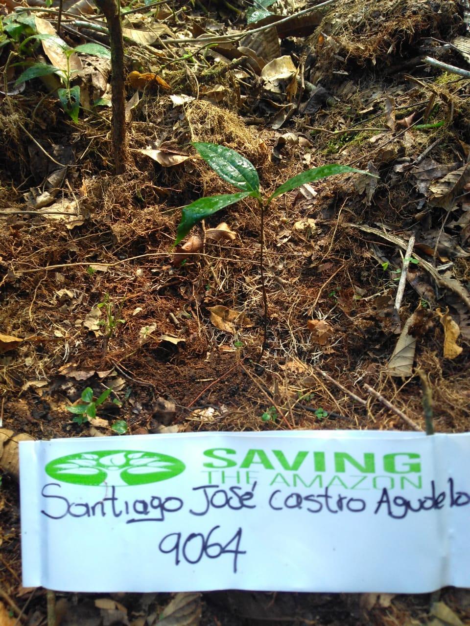 Fundación Saving the Amazon