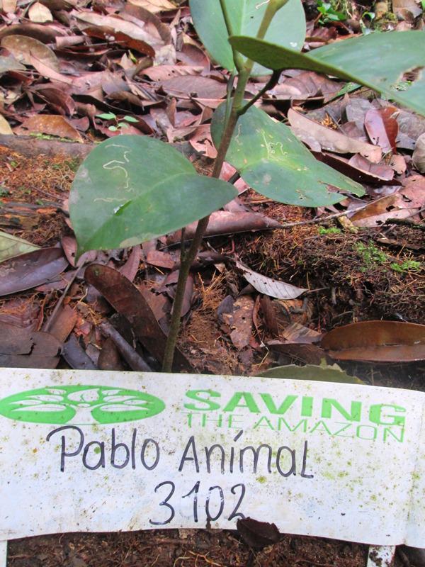 Pablo Animal