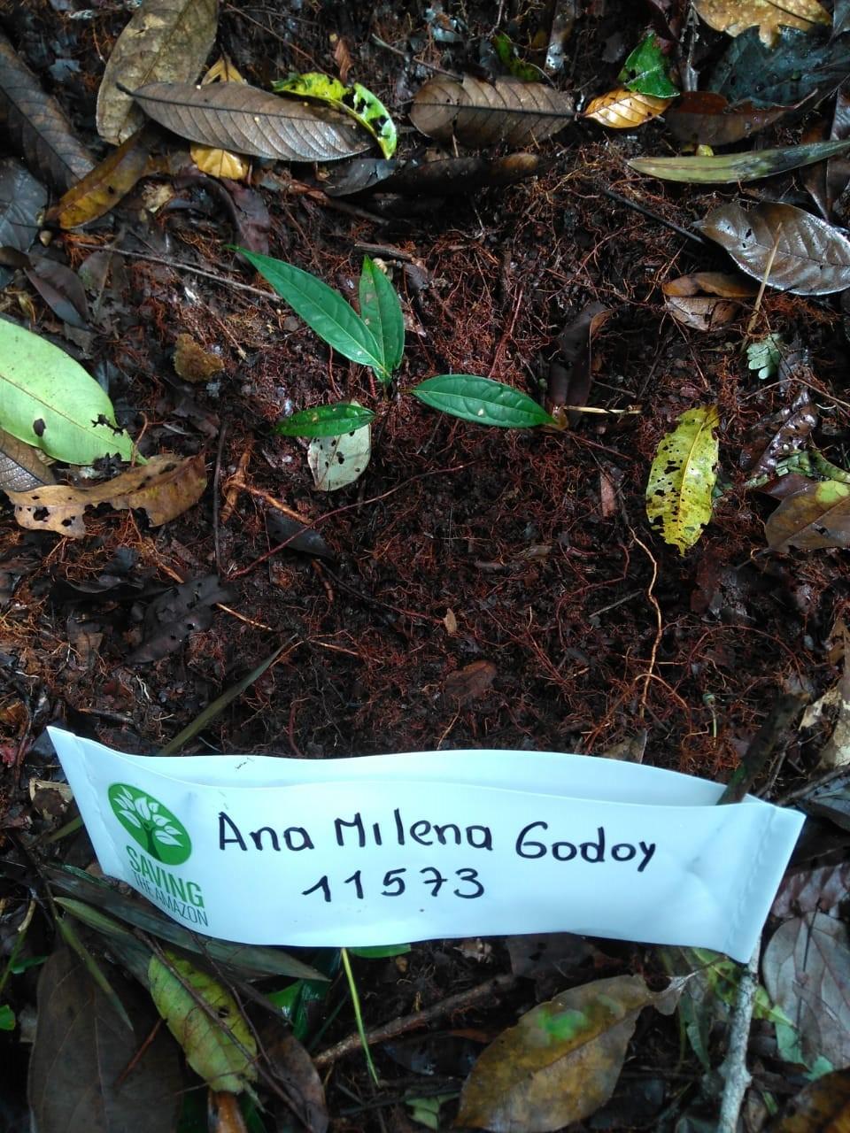 Ana milena godoy