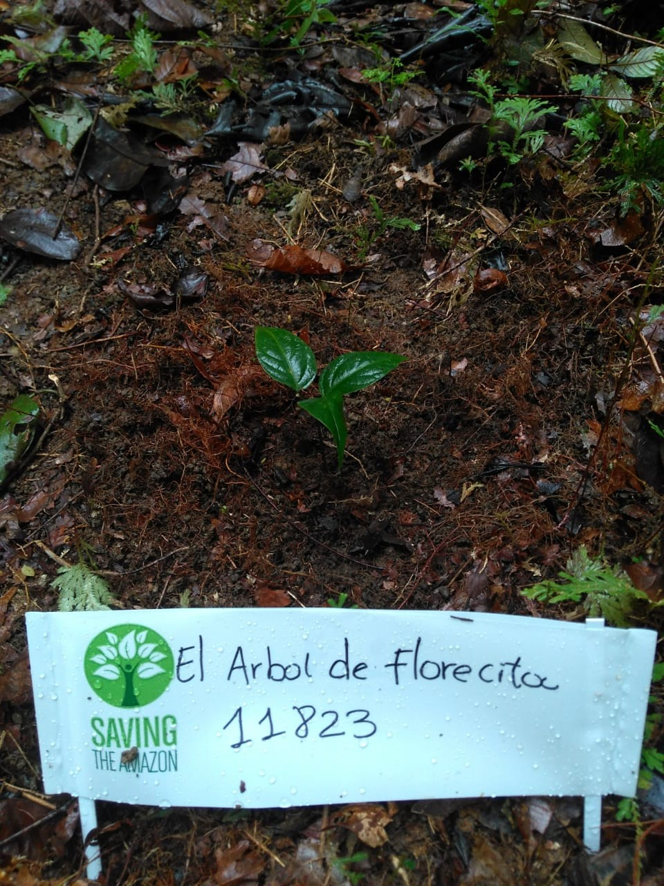 Florecita de El Bosque
