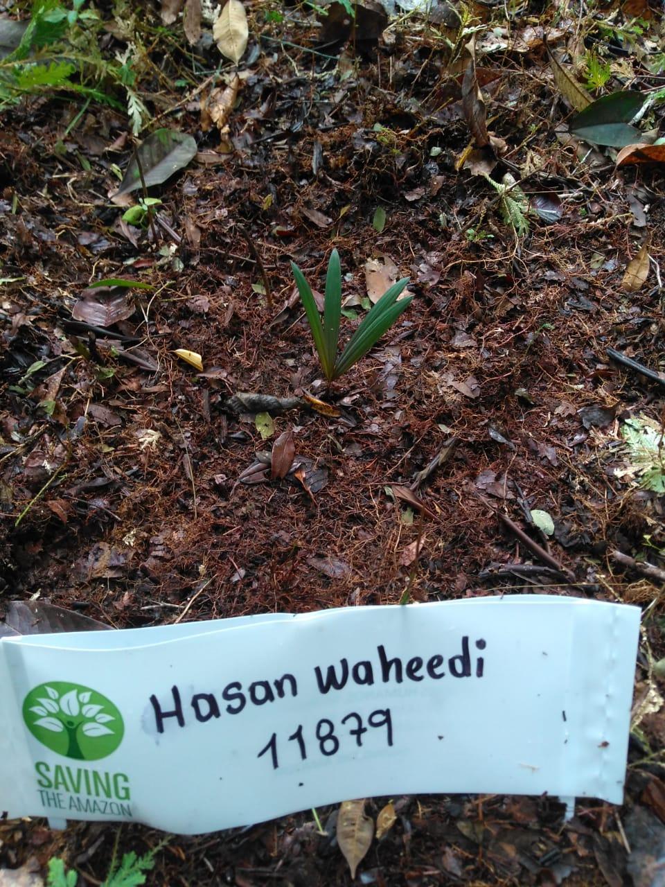 Hasan Waheedi