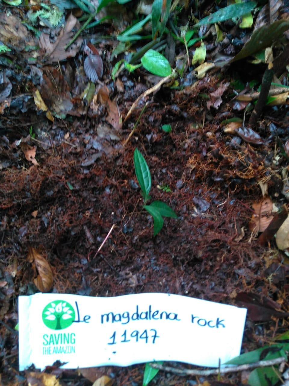 Le magdalena rock