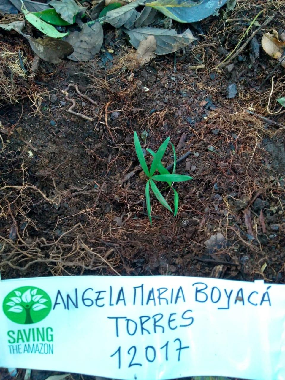 Angela Maria BOYACÁ TORRES