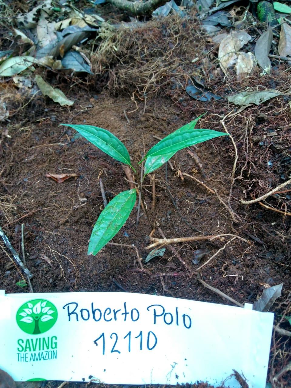 Roberto Polo