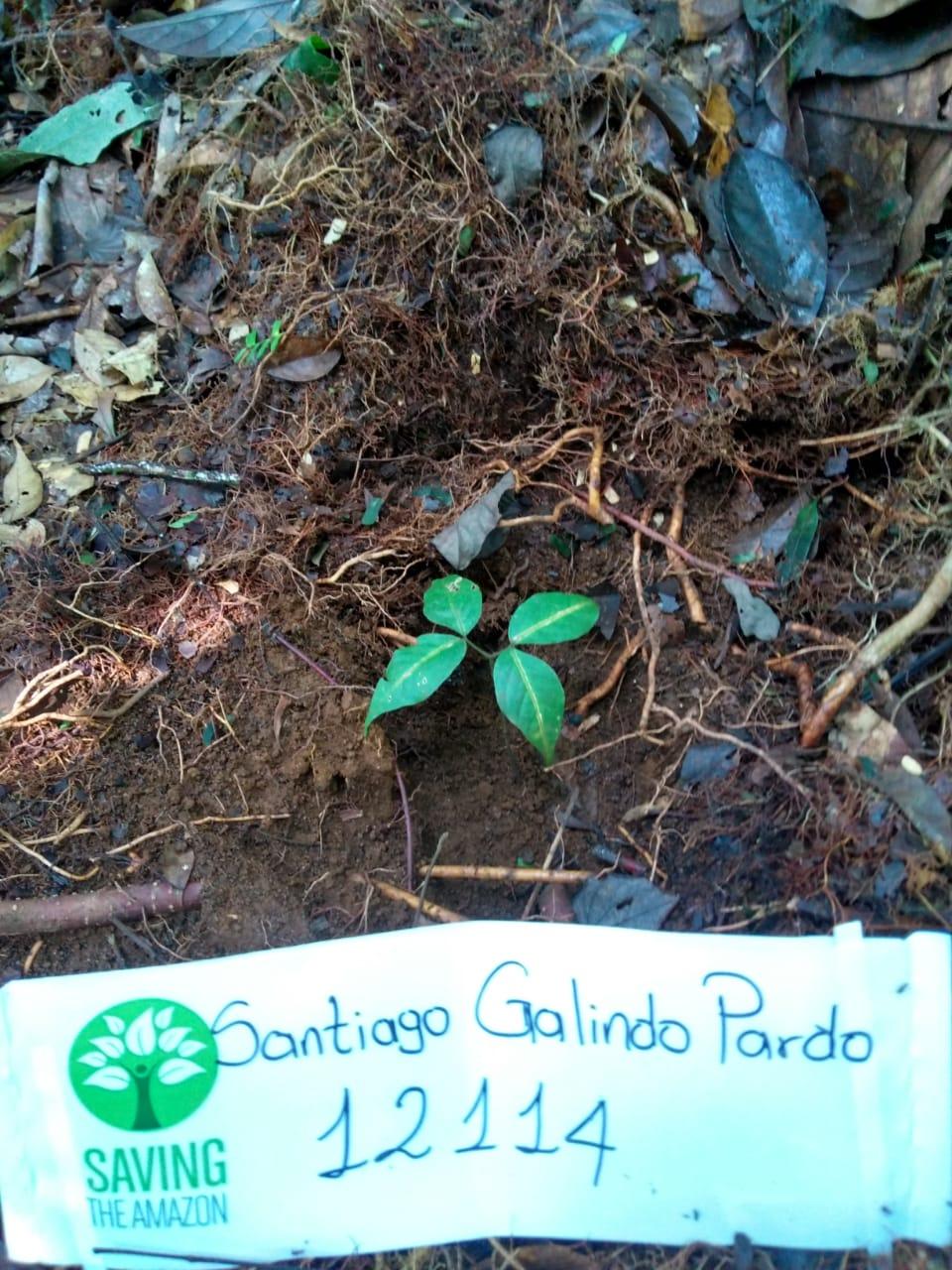 Santiago Pardo Galindo