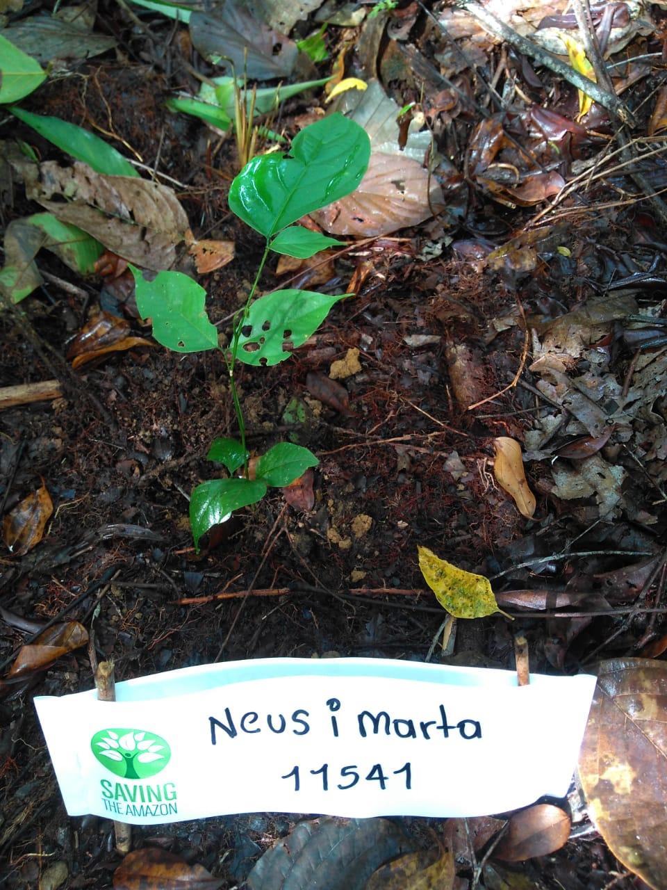 Marta Quevedo Oltra