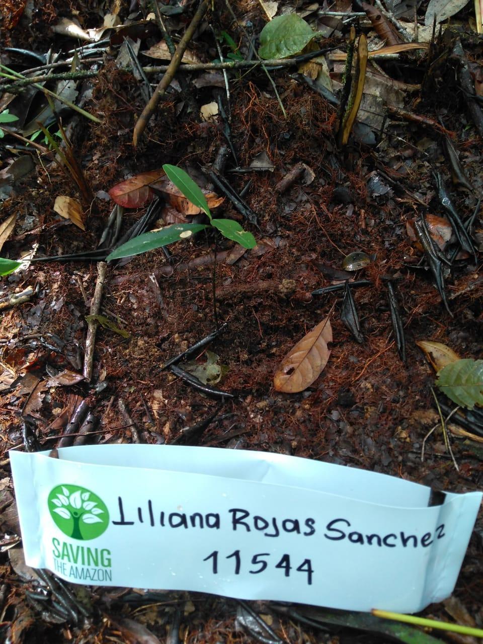 Liliana Rojas Sánchez