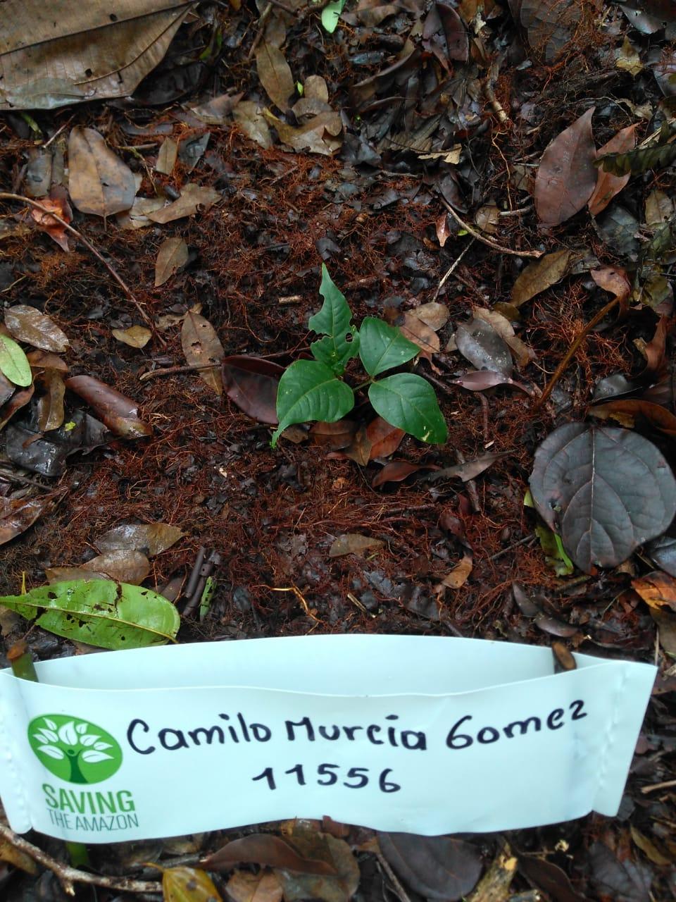 Camilo gomez Murcia