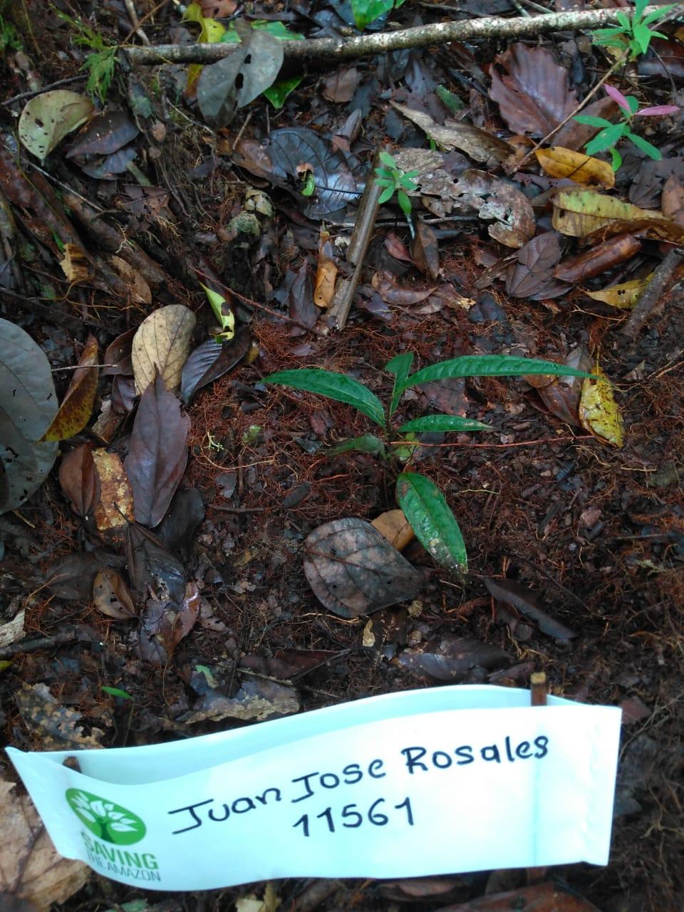 Rosales juan jose